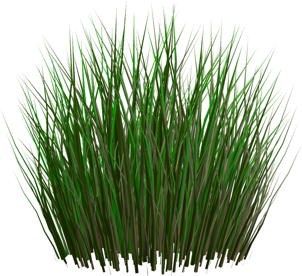 Grass Png Image Green Grass Png Picture Rumput