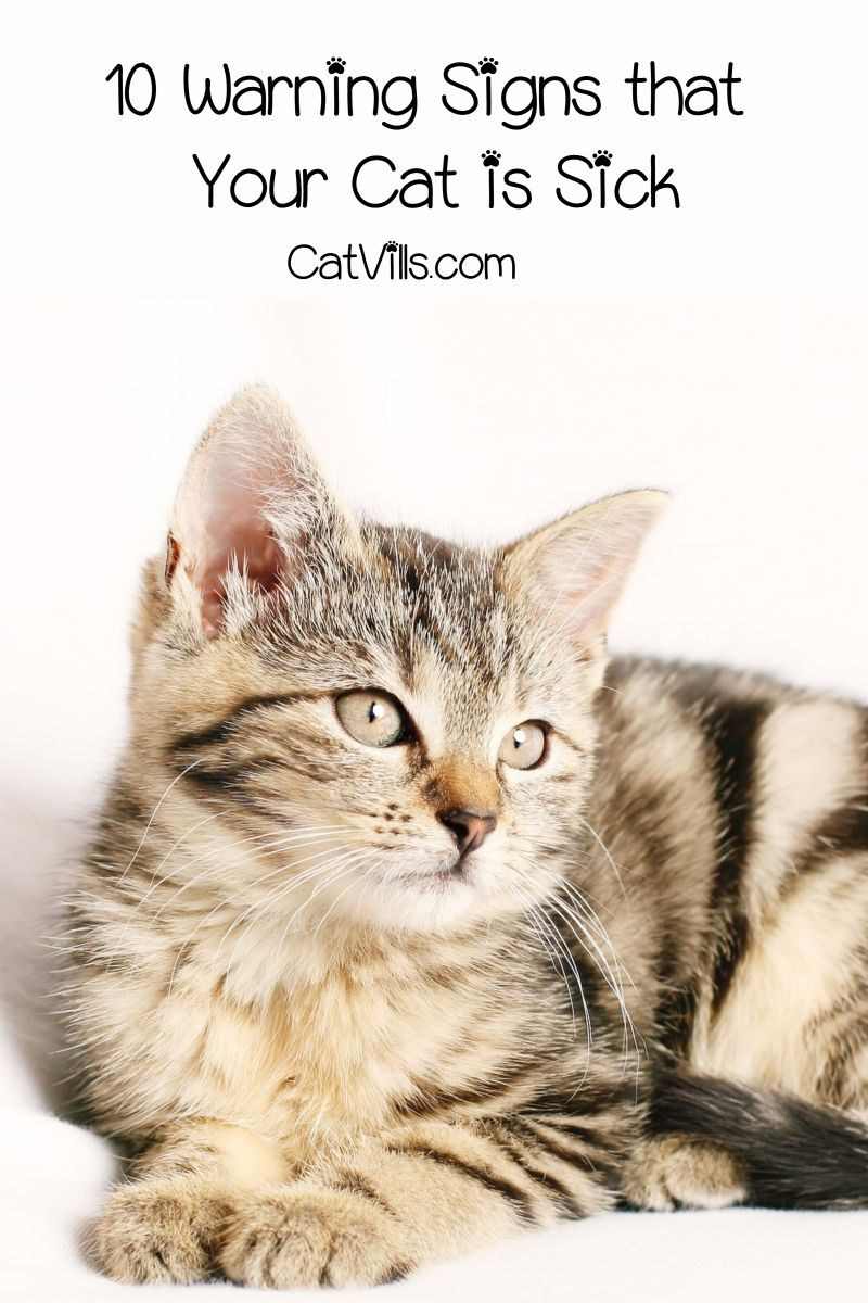 10 Warning Signs That Your Cat Is Sick Catvills Training A Kitten Sick Cat Hipster Cat