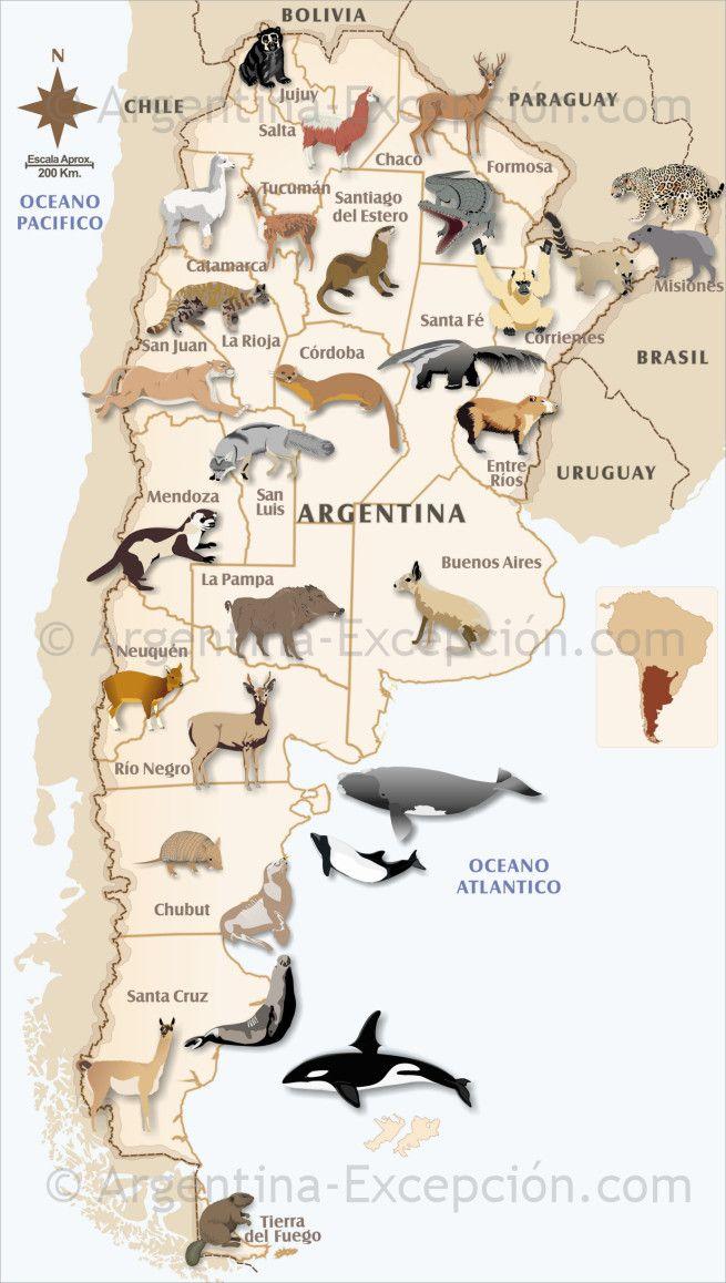 Mapa de la fauna en Argentina Mapa de argentina, Mapa de
