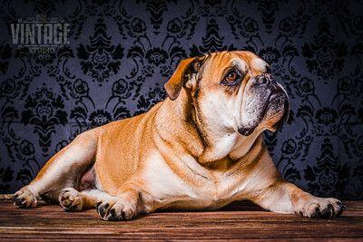 Hundebilder Zum Ausdrucken Hunde Fotos Hundefotos Hundebilder