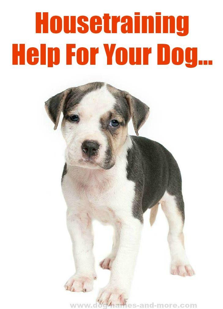 Doggy Dan S Kind Gentle Dog Training Method Dog Training Dog