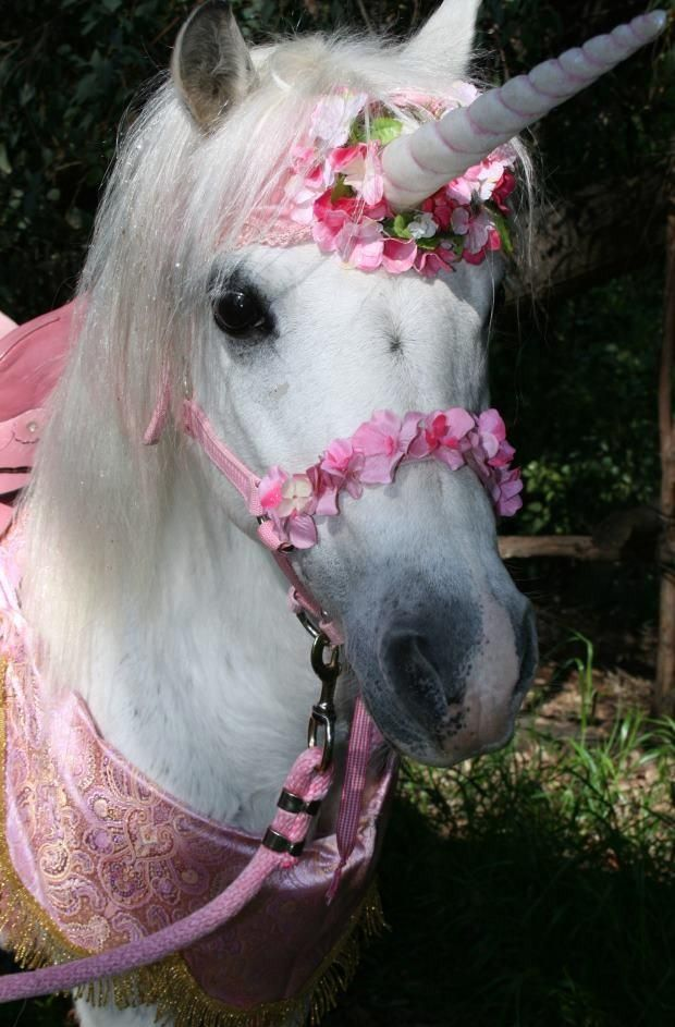 88266b8c51b ... as a unicorn. Cutest 5 year old party ever! Ponies for parties