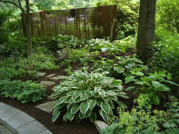 shade garden hosta astilbe epimedium ferns ladys