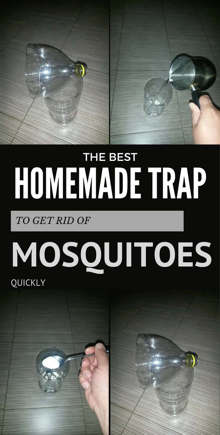 these traps are highly effective they have the potential to kill