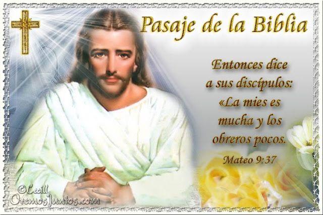 Vidas Santas: Santo Evangelio según san Mateo 9:37