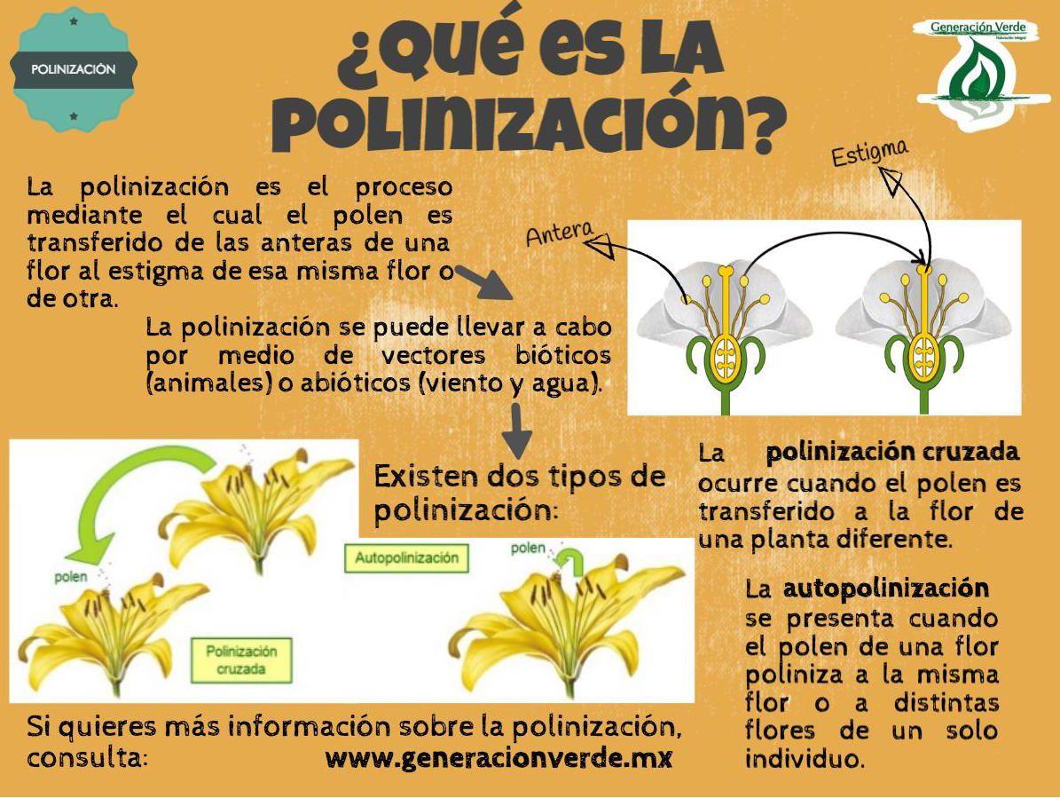 Abeja mellifera reproduccion asexual de las plantas