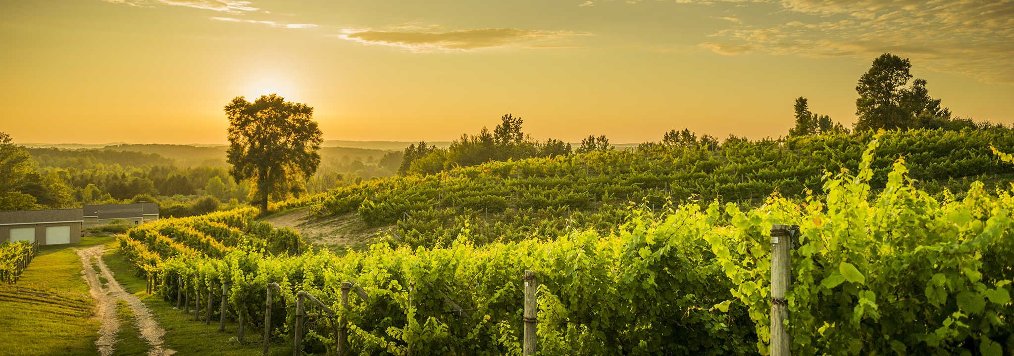 This Summer Enjoy The Many Wineries Vineyards And Festivals Around Traverse City Mi Browse Our Listings Vineyard Tour Traverse City Wineries Traverse City