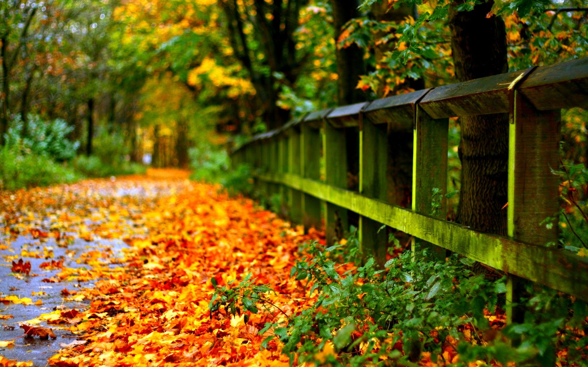 Download Large Size Wallpapers For Laptop Gallery Autumn Leaves Wallpaper Fall Pictures Fall Wallpaper