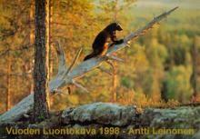 1980-2002   Vuoden Luontokuva
