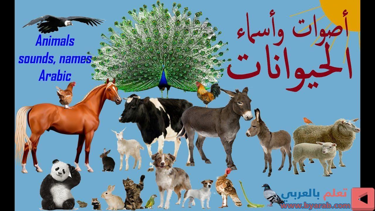 Sounds And Arabic Names Of Animals أصوات وأسماء الحيوانات Christmas Ornaments Holiday Decor Novelty Christmas