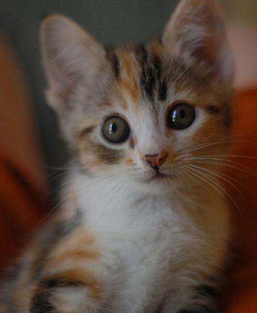 CyBeRGaTa - Cats, Memes, New Mexico