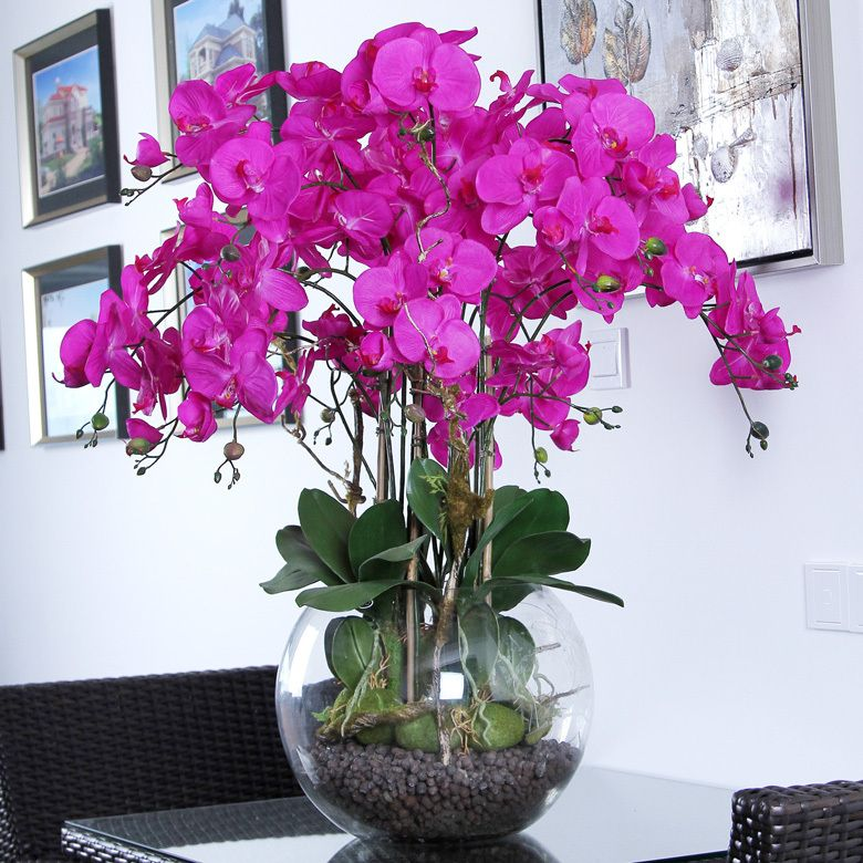 Phalaenopsis Orchids Care - How to Plant, Grow & Grow [Step-By-Step ...