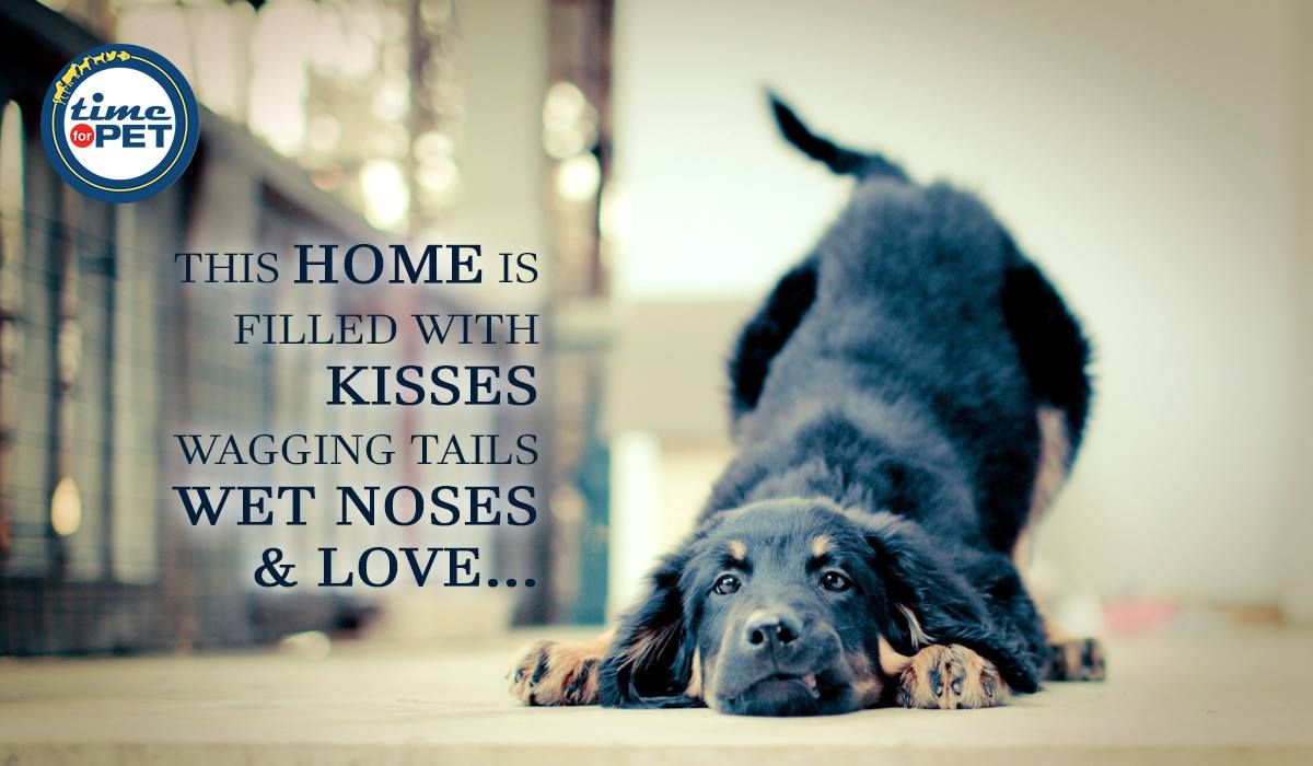 True Love Quoteoftheday Quote Petlover Petlove Animallover Timeforpet Dogs Dog Doglove Dogcare Pupp Online Pet Store Buy Pets Animal Rescue Stories