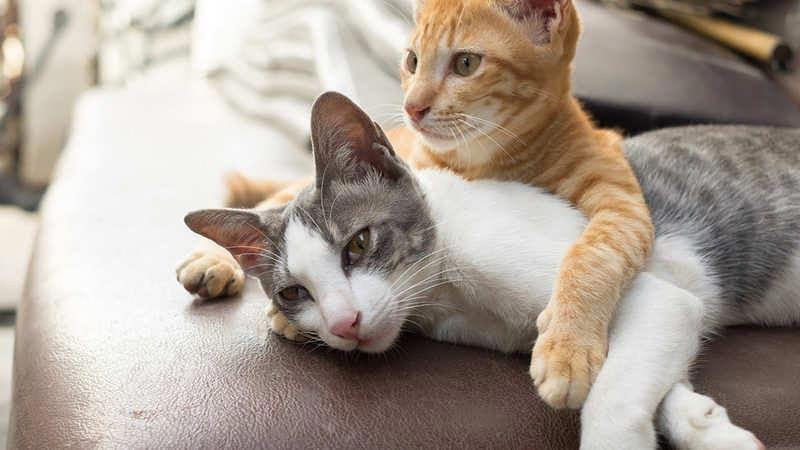 Grooming Ideas Fuzzy Kitten Make Cat Cat Scratchers Kittens Cutest Cat Grooming Cat Lovers