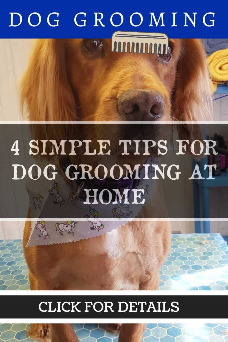 Dog Grooming Tips at Home *** Read more info by clicking