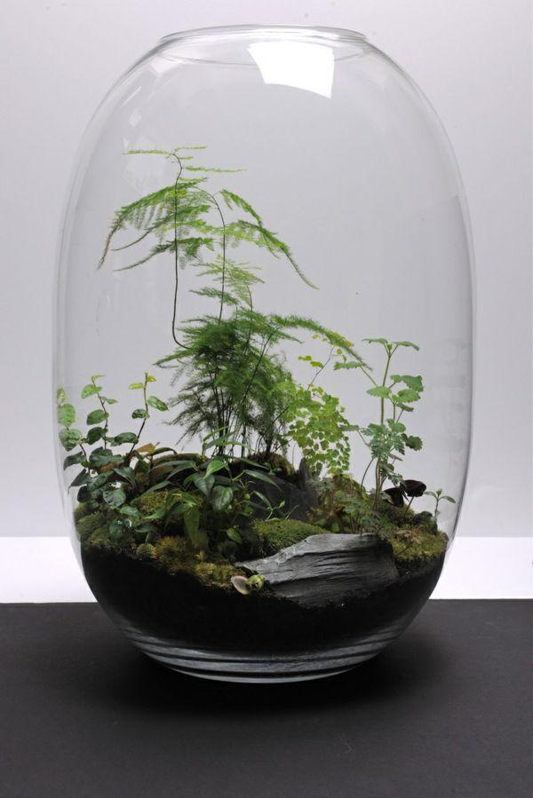 Plants love terrariums terraria plants and gardens for Indoor gardening glasses