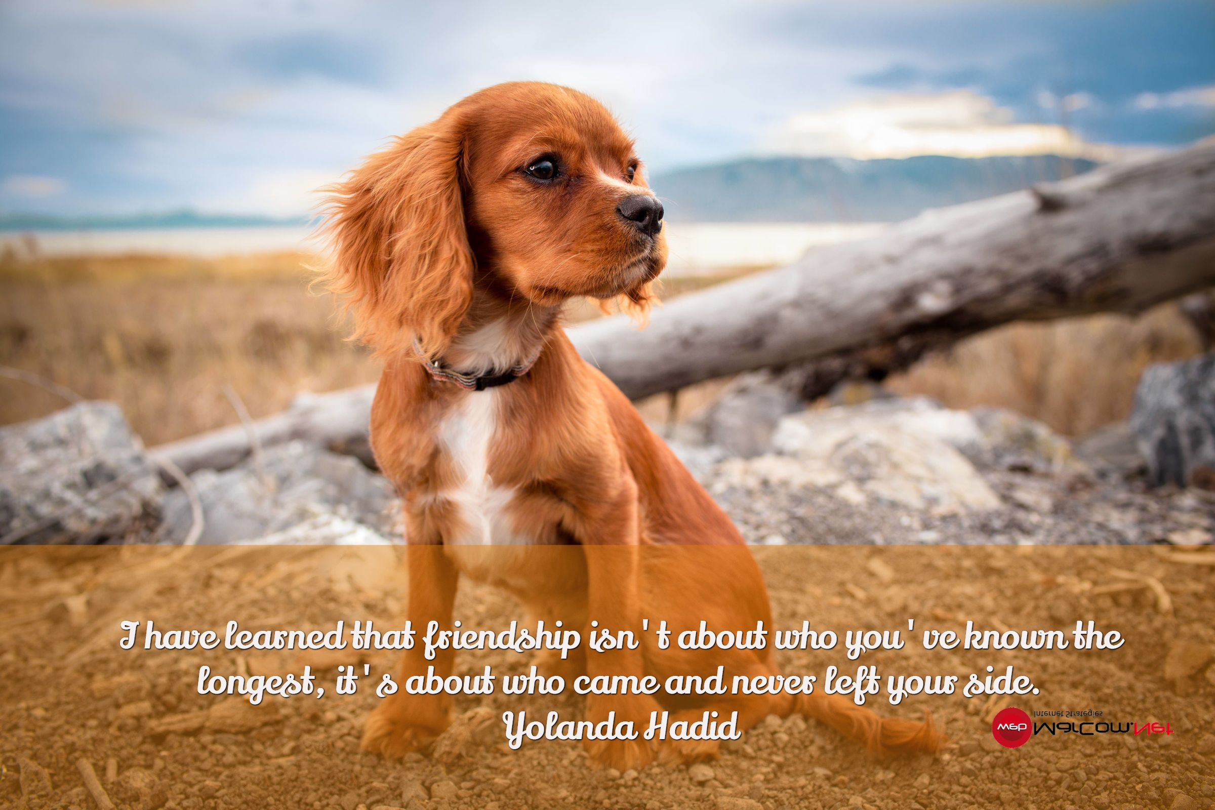 I have learned that friendship isn't about who you've