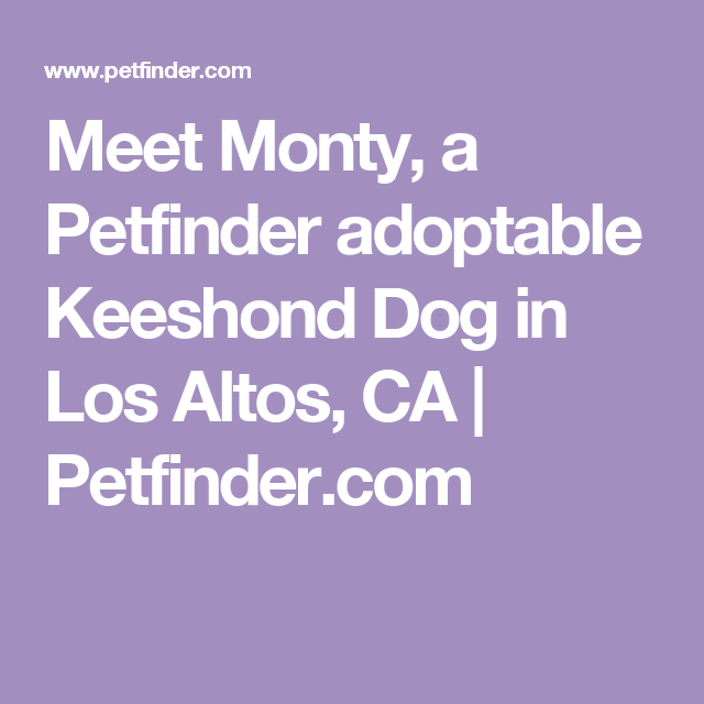 Adopt Monty Adopted on Adoptable dachshund dog, Rat
