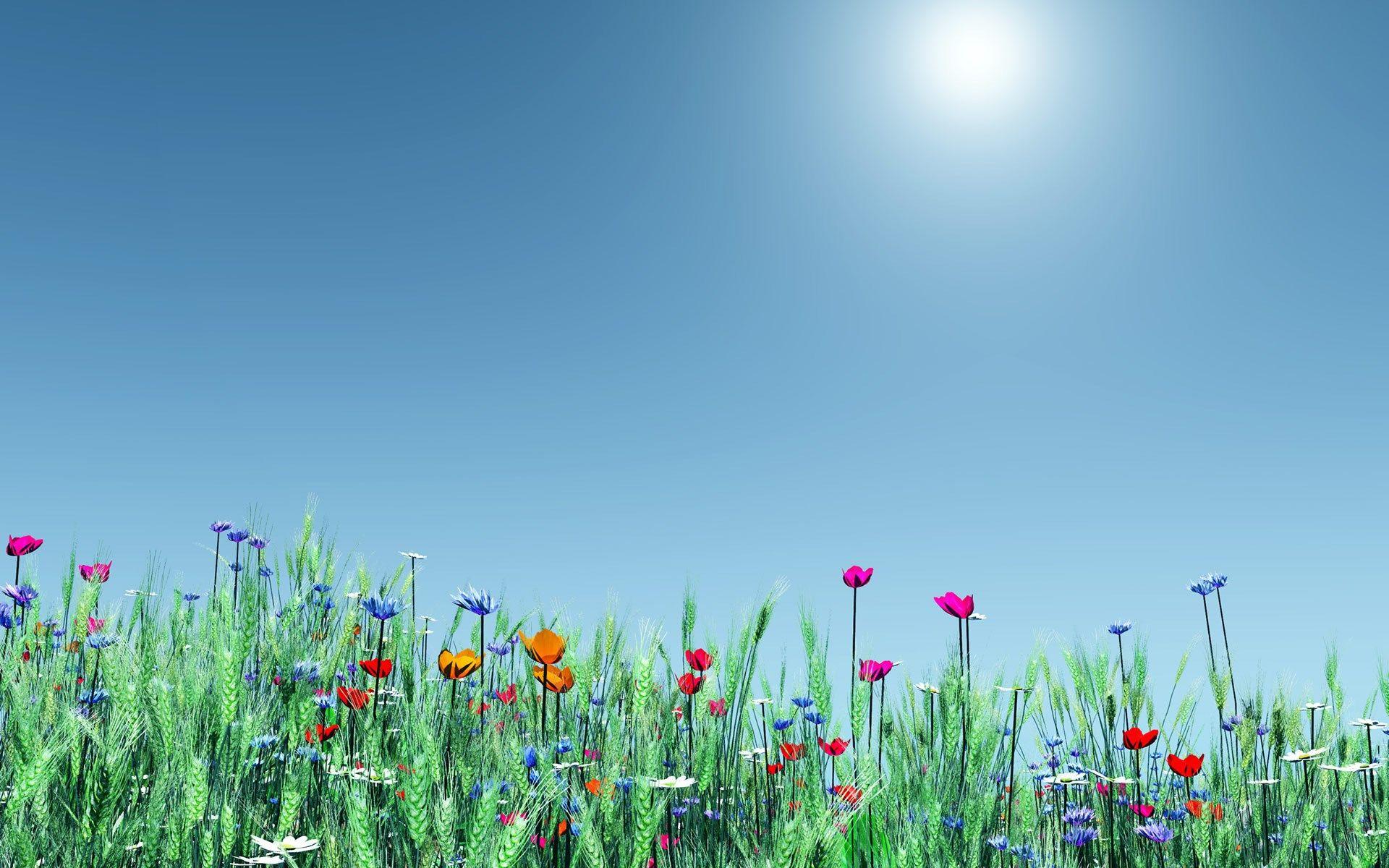 spring flowers background widescreen o oshka