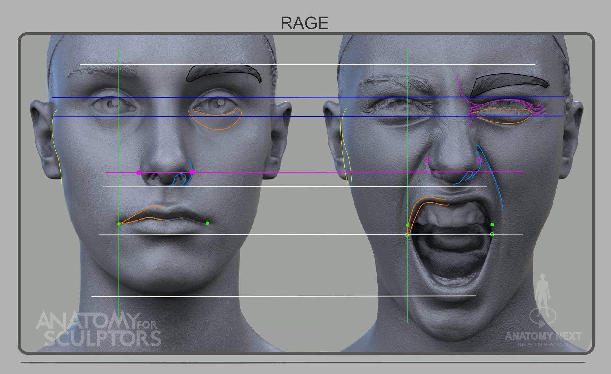 Rage front | Anatomía, Rostros y Expresion