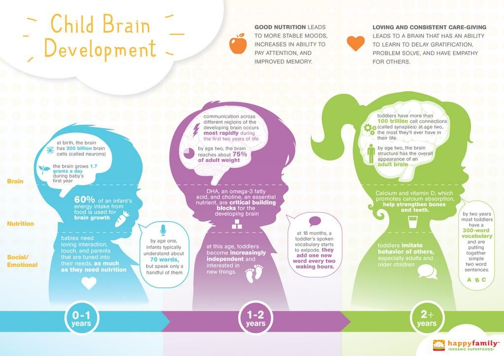 An infographic to show the early development of human brains and ...