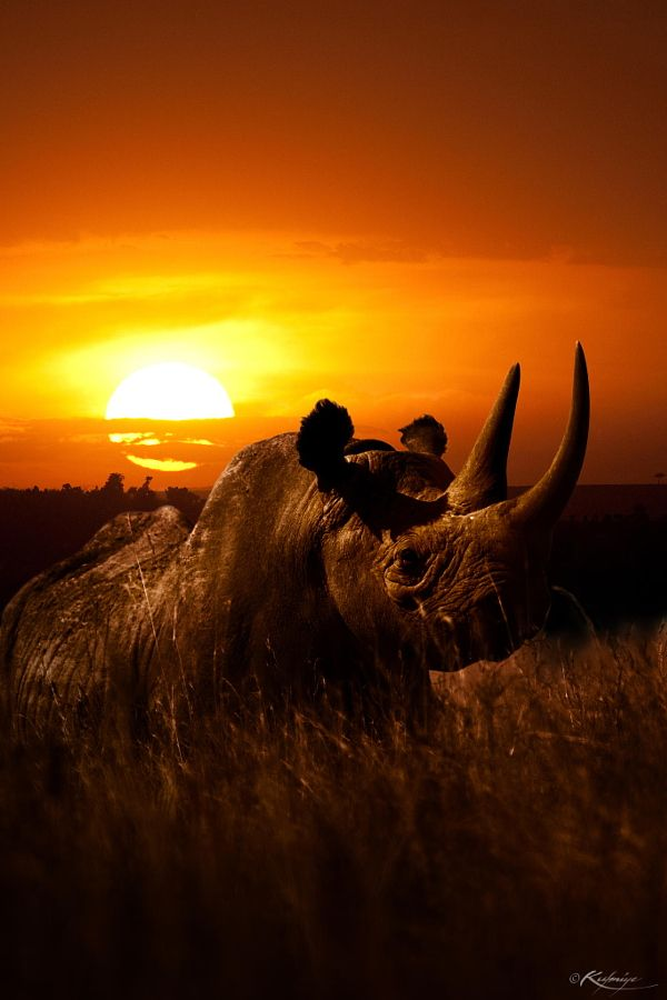Photograph Sunset Kifaru by Kulmiye Chan on 500px