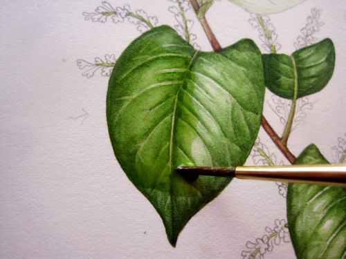 Lizzie Harper Watercolour Step 8 In Painting A Leaf Watercolor