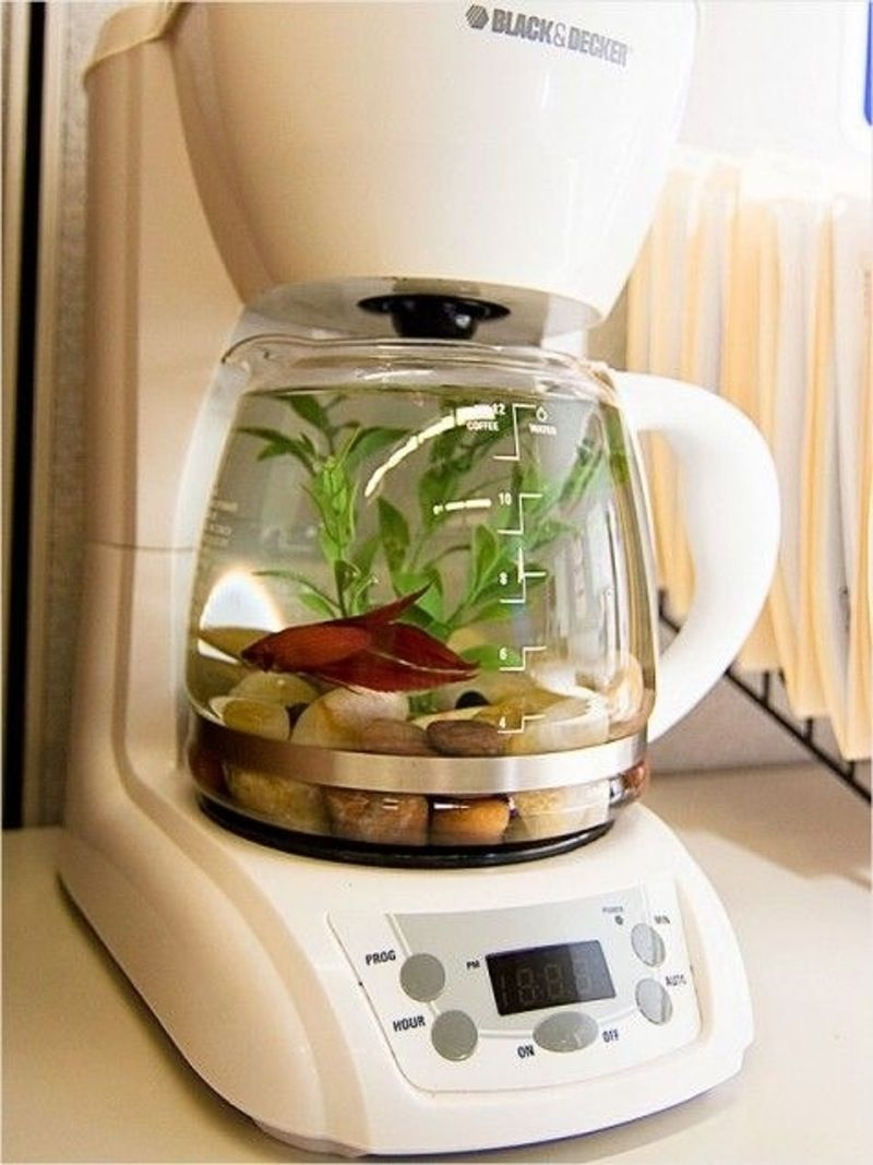 Fish aquarium is good in home -  Coffee Maker Fish Tank 28 Everyday Items Turned Into Fish