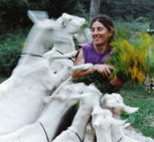 <p>La fromagerie Domaine de Courval produit du fromage de chèvre certifié bio par Écocert, un organisme de contrôle fondé en France en 1991.<br /><br />Raynald Hébert est Québécois et Laurie Goodhart est américaine. Le couple possédait une micro fromagerie l'État de New York et fabriquait du fromage depuis 18 ans. Ils sont au Québec depuis 2005.</p>
