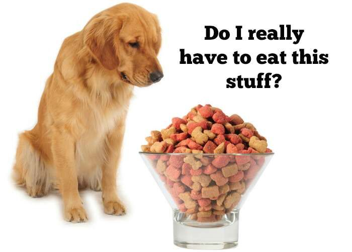 Feeding A Dog Cheap Dog Food Can Cost You Dog Food Advisor Dog