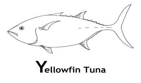 Tuna Fish Coloring Sheets Coloring Pages Coloring Sheets Coloring Pages Tuna Fish