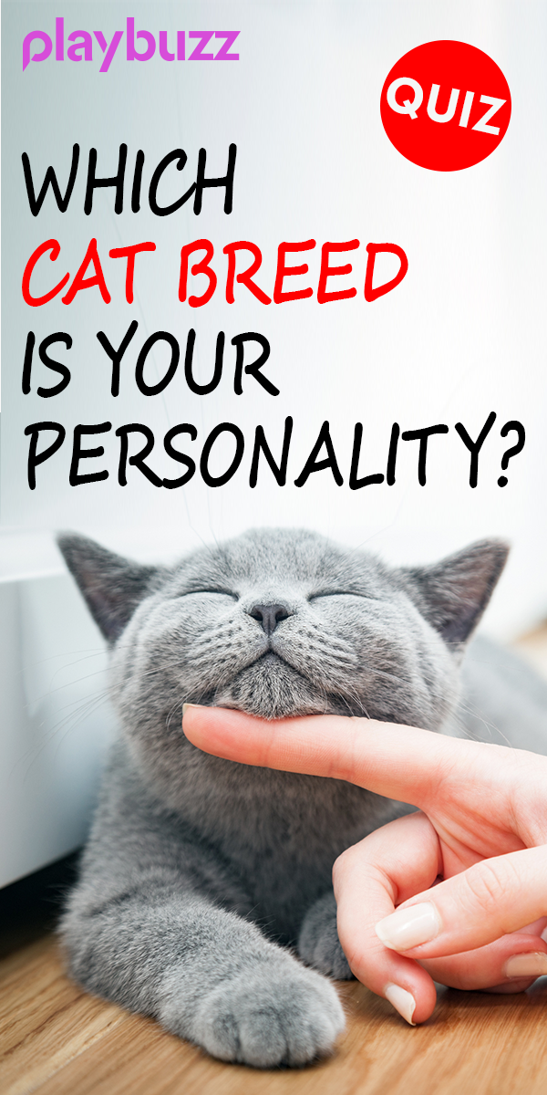 Which Cat Breed Is Your Personality Cat Breeds Cat Movie Grumpy Cat Breed