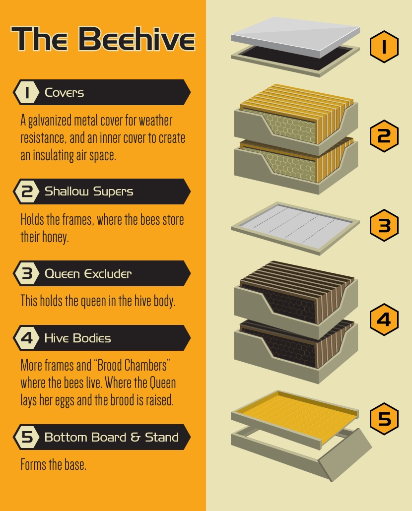 an introduction to beekeeping bee keepin pinterest apiculture ruche et abeille. Black Bedroom Furniture Sets. Home Design Ideas