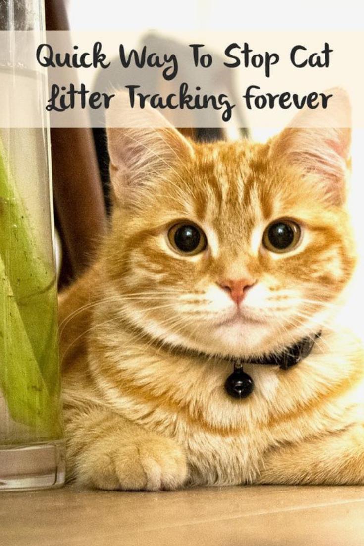 Waterproof Cat Litter Mat The Shopolics Litter Tracking Cat Litter Cat Training Litter Box