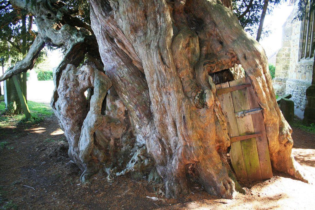 yew tree with door & yew tree with door | Spiritual | Pinterest | Doors White rabbits ...