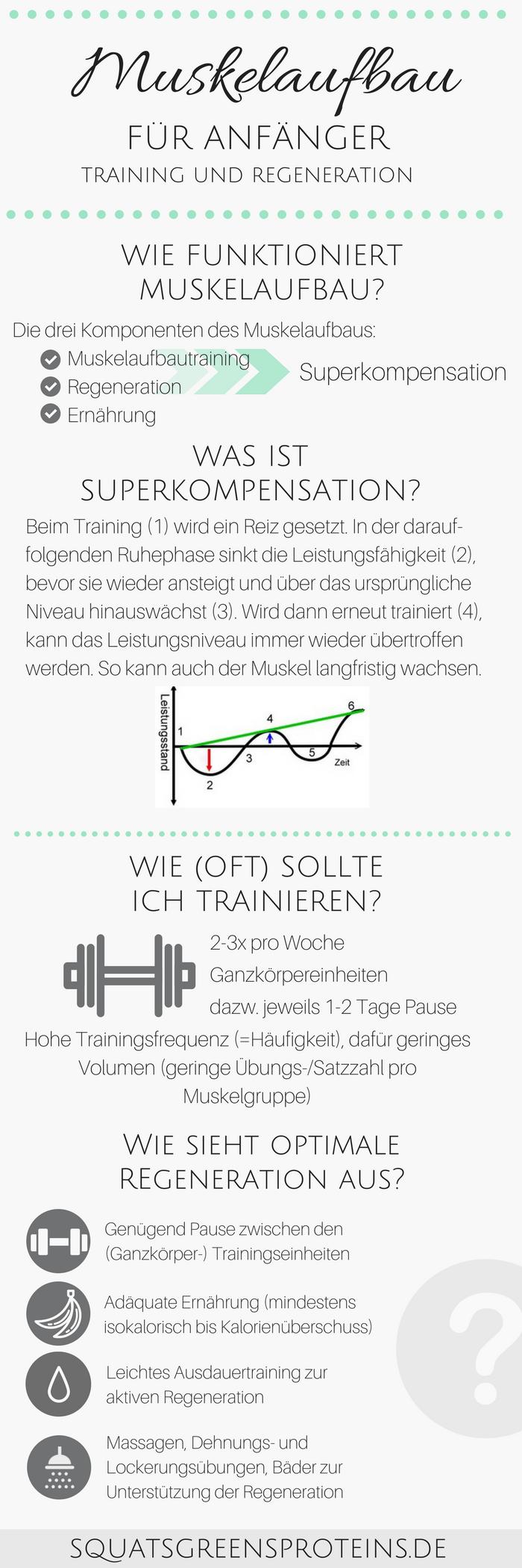 Muskelaufbautraining und Regeneration für Anfänger ...