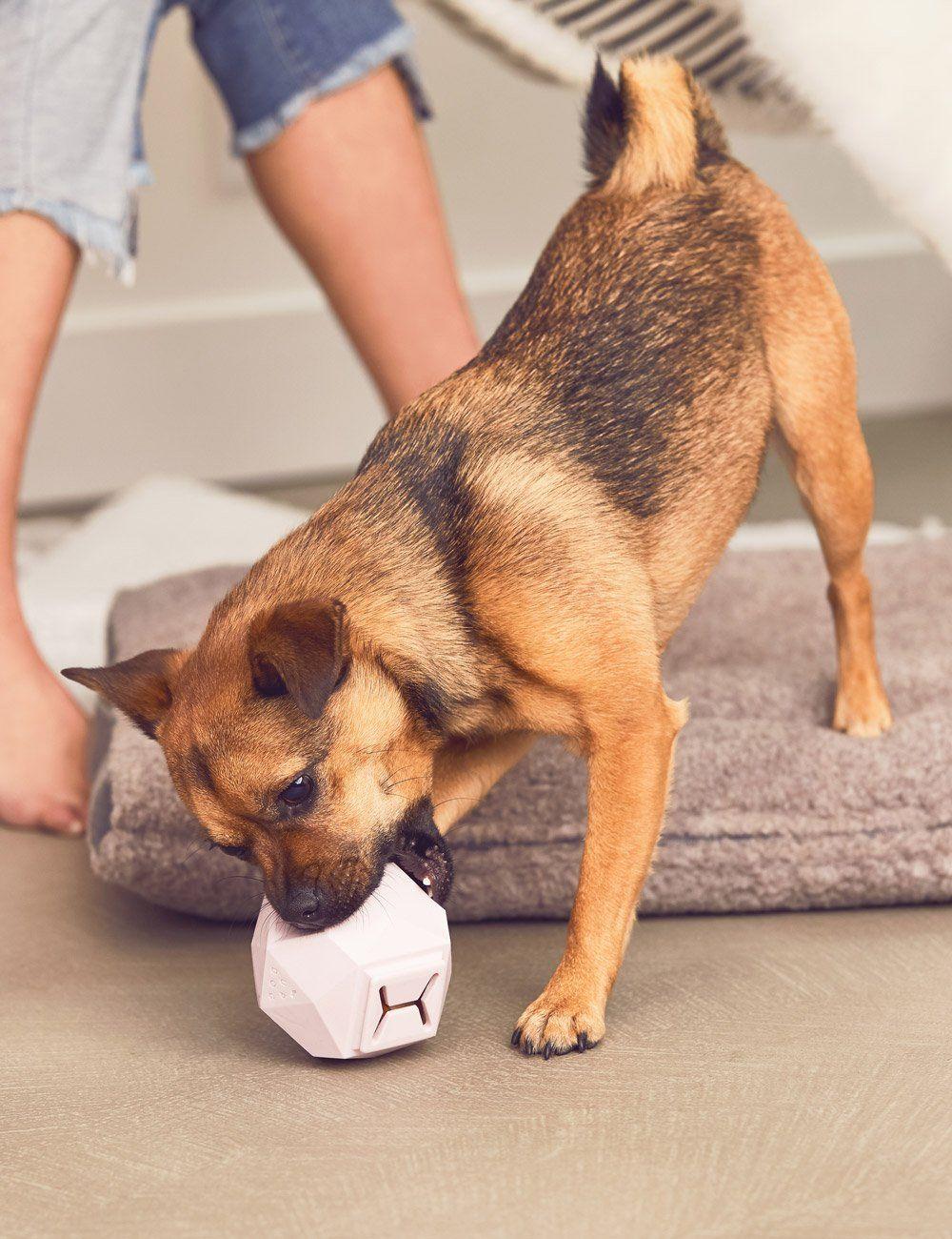 The Odin Rose Quartz Modern Dog Toys Dog Milk Dog Toys