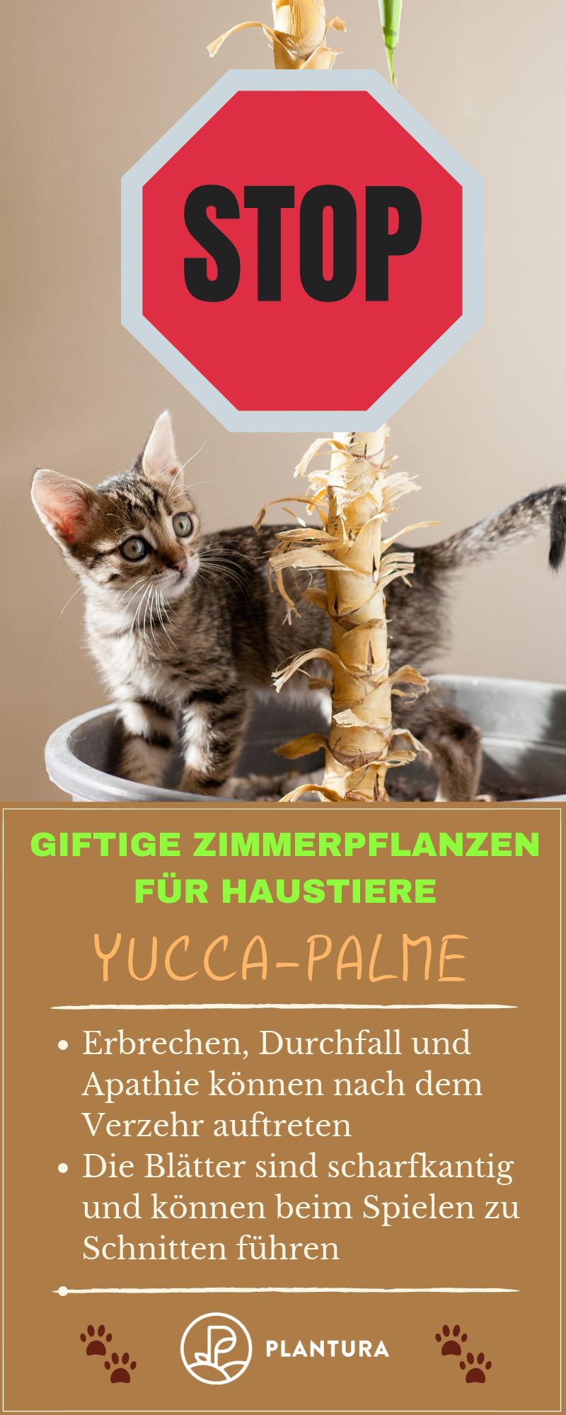 10 Giftige Zimmerpflanzen Fur Haustiere Plantura Pflanzen Haustiere Giftige Pflanzen