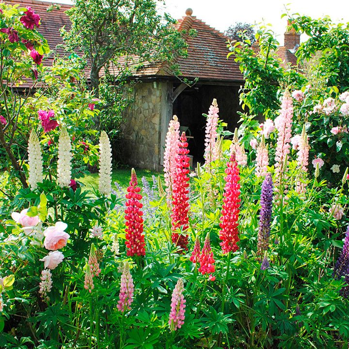 Cottage Garden Seed Collection   Suttons Seeds And Plants