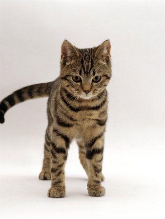smallest kitten ever