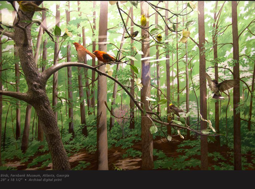 Woodland Forest Diorama Woodland Forest Diorama Image