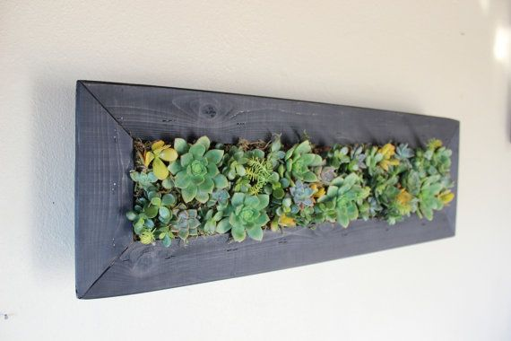 Hanging Living Wall aka Succulent Planter. by OneWithPlants. I want this!