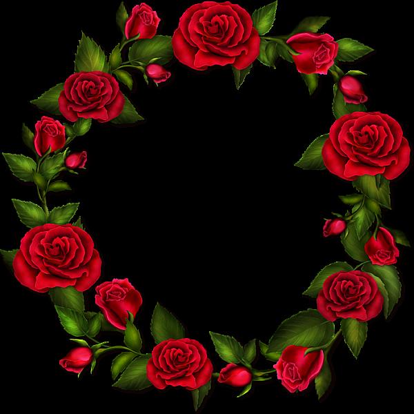 Circle Roses Transparent Frame Roses drawing, Rose