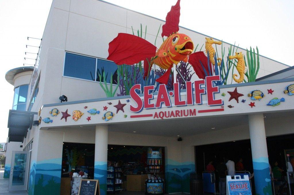 sea aquarium at legoland california sea aquarium