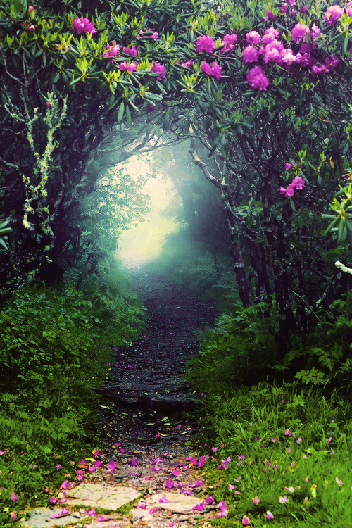 Looks like a great place to hide out from the world.... {Portal, The Enchanted Wood photo via wolfteeth}