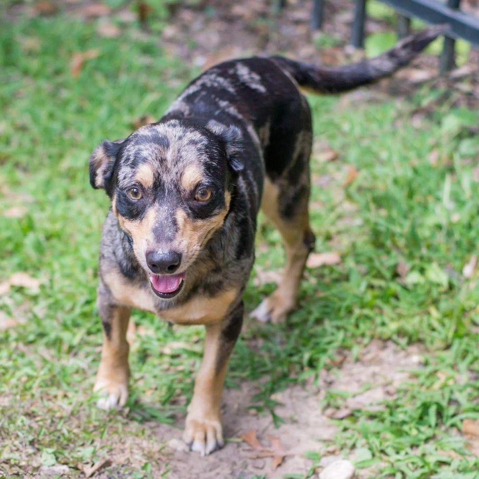 Catahoula Dachshund Mixed Dog Breed Dachshund Mix Dog Breeds Dachshund