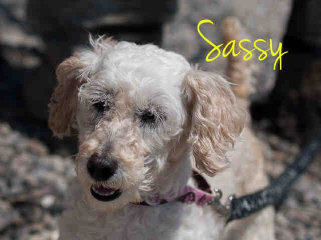 Sweet Senior Sassy Needs A Loving Home Pittsburgh Pa