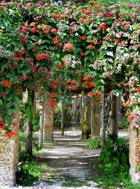AOL Travel Ideas. Miami FloridaSouth FloridaTropical GardensFlorida  Botanical ...
