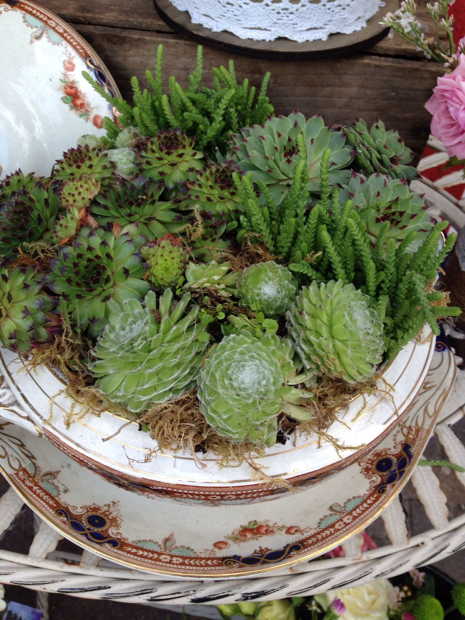 Beautifully planted in a vintage Tureen