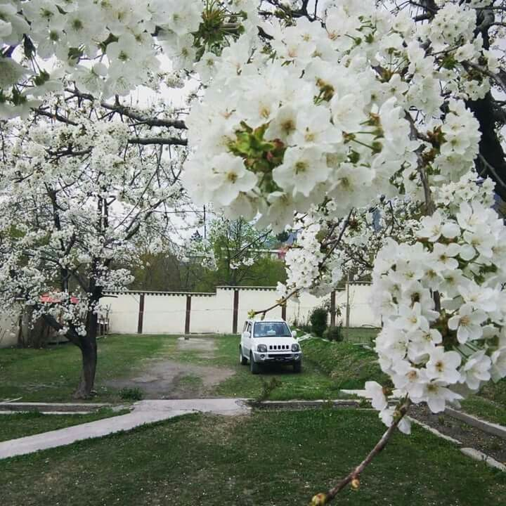 White Cherry Blossoms In Chitral Pakistan White Cherry Blossom Black And White Pictures Pakistan Travel